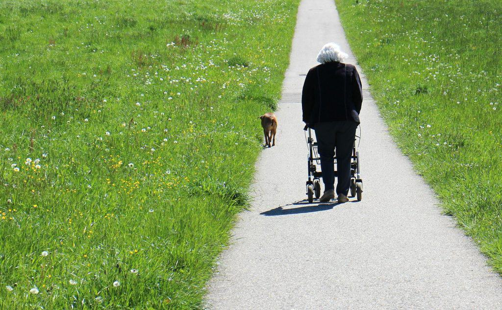 An old woman pushing a rollator walker on a paved path between two green fields.